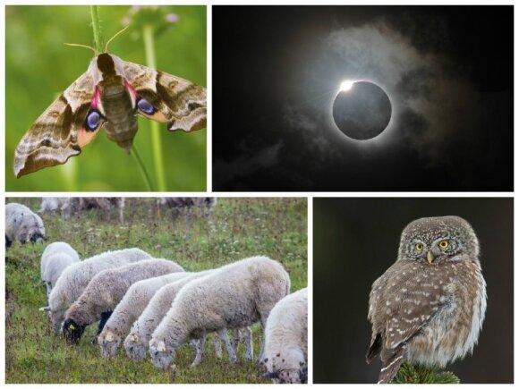 Saulės užtemimas paveiks ir gyvūnija - drugius, avis, pelėdas ir daugumą kitų