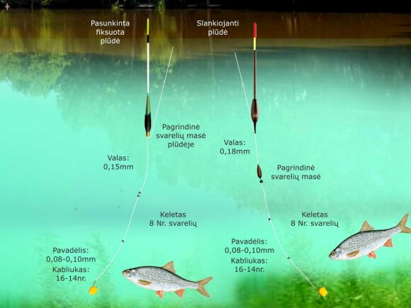 Schema. Kuojų žvejyba rudenį stovinčio vandens telkiniuose