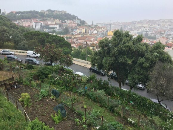 Daržai Lisabonos centre