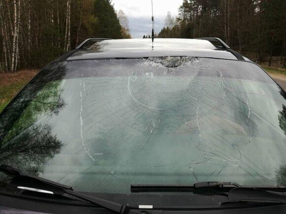 """Antis pramušė """"Volkswagen Passat"""" stiklą"""