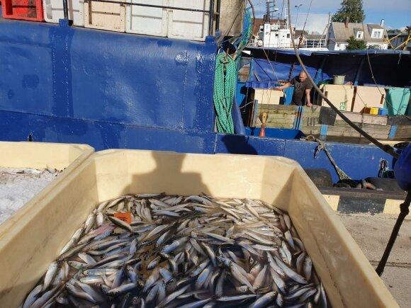 Žvejybinių laivų patikrinimas