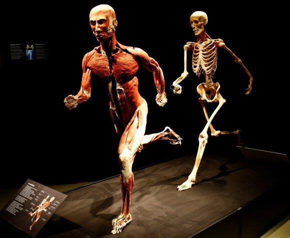 The Body Worlds paroda