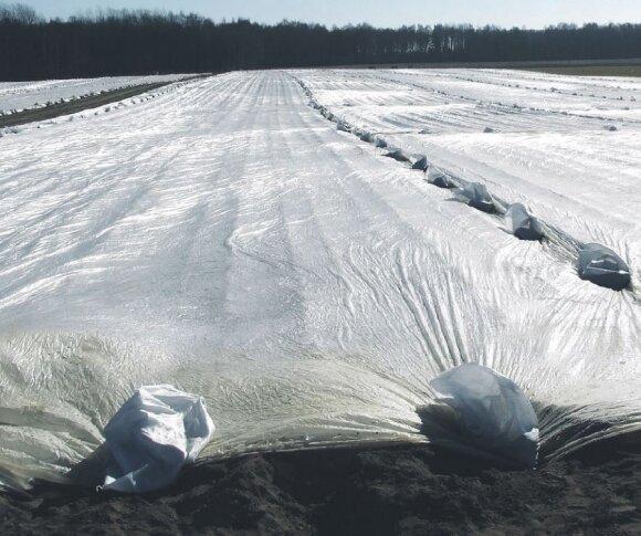 Ūkininkas Saulius Dambrauskas jau pasodino bulves