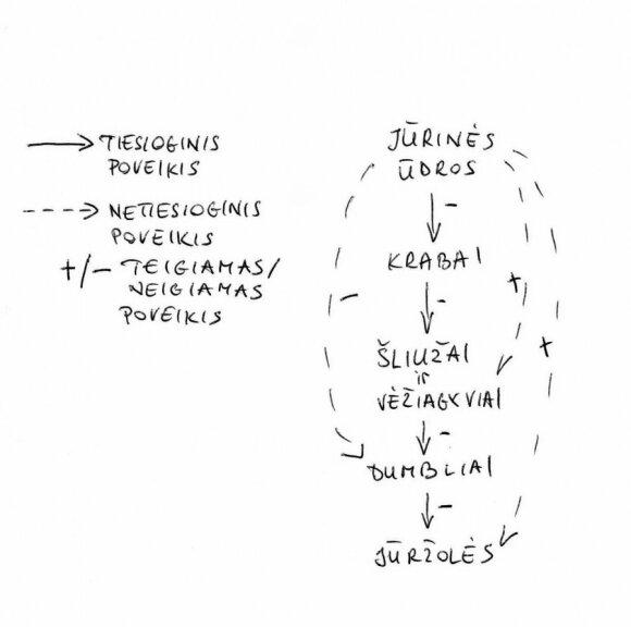 Ūdros mitybos grandinė/ K. Simonaitytės iliustr.