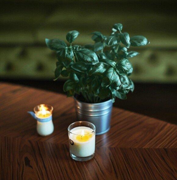 Prabangius kvepalus iškeitė į eterinius aliejus: kvapuose slypi didžiulė jėga