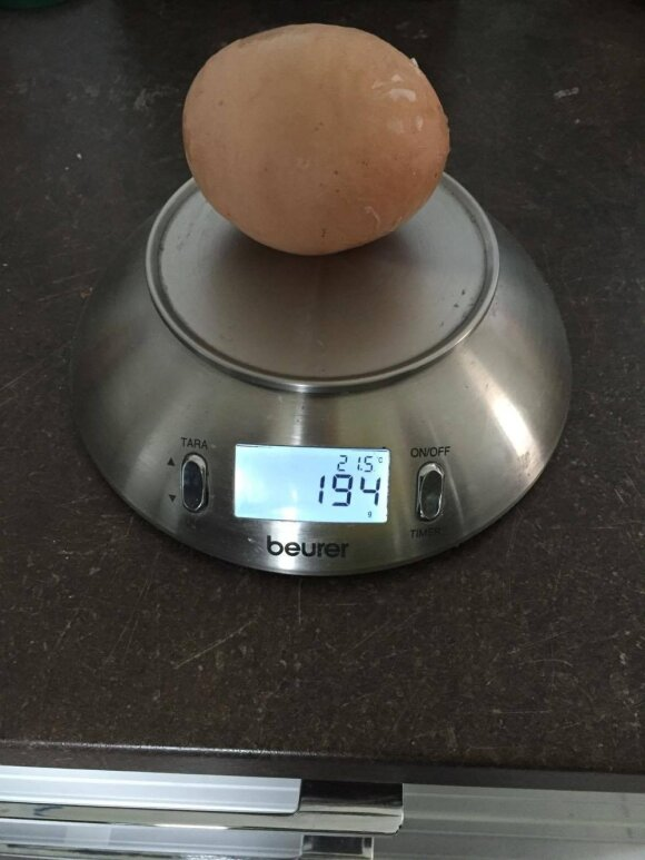 Klaipėdos r. višta padėjo milžinišką kiaušinį