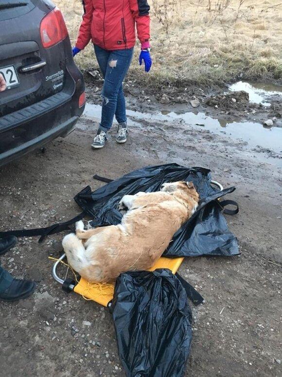 Nukankintas ir nušautas šuo
