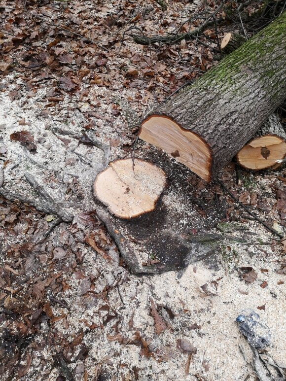 Darbuojantis savo sklype galima sulaukti ir baudos: kada negalima pjauti žolės ar medžių
