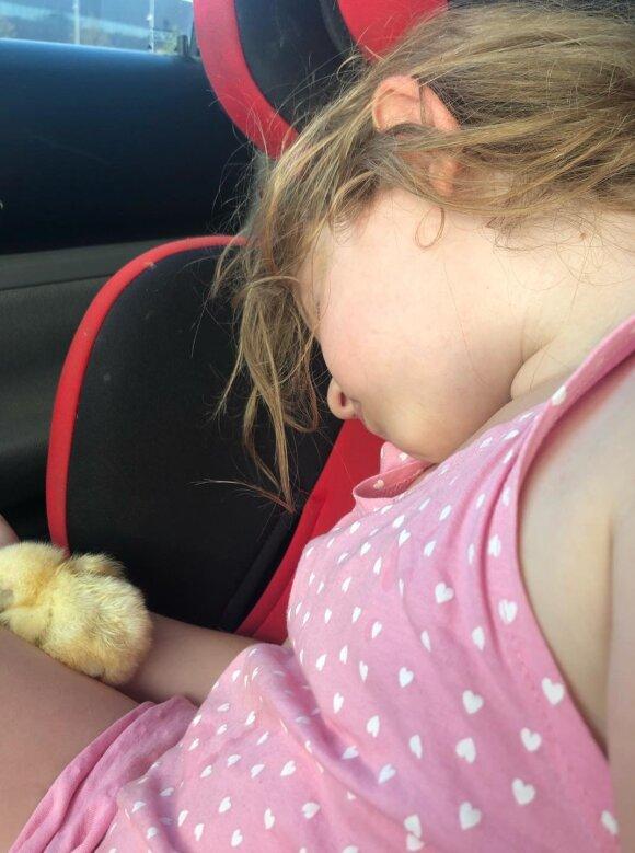 Gintarė Karaliūnaitė namuose priglaudė viščiuką