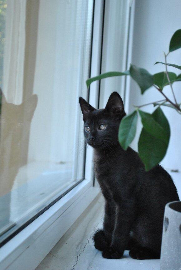 Katinas Petras