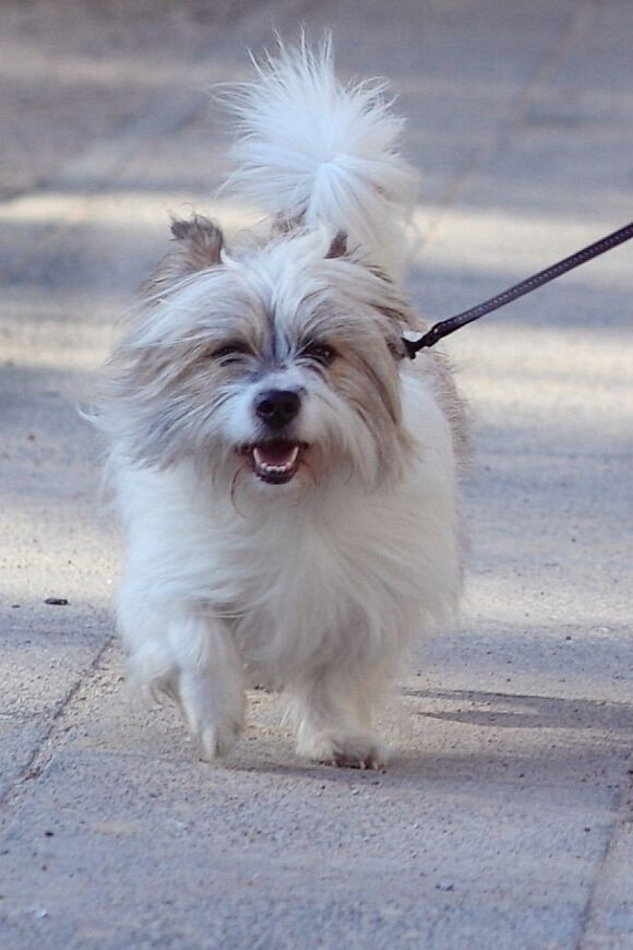 Kauno rajone dingo baltas šuniukas