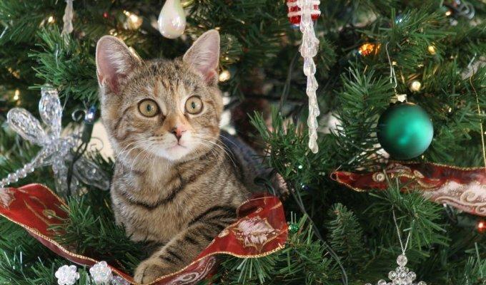 JUOKINGA: kaip katės išdykauja namuose per Kalėdas VIDEO