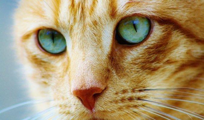 Susipažinkite: katinas George'as, visada stovintis ant dviejų kojų