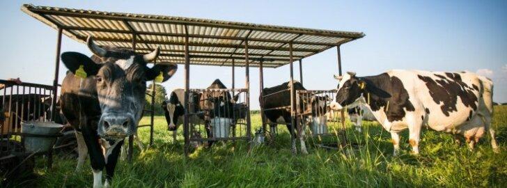 Pieno tarybai vadovaus kooperatyvo atstovas