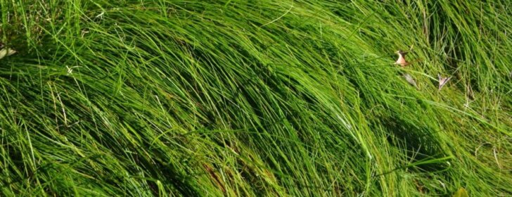 Augalai, kurie džiugins vasaros pabaigoje, rudenį ar net žiemą