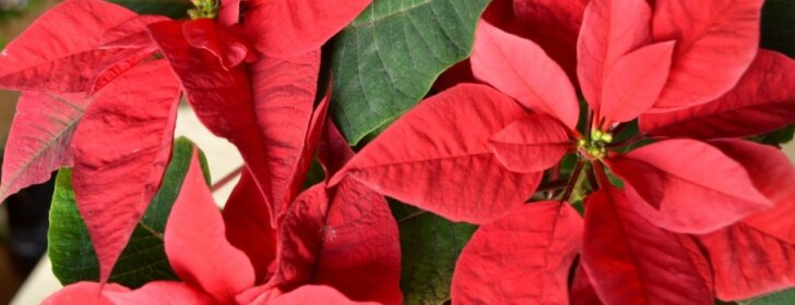 Kaip pasirūpinti kambarinėmis gėlėmis rudenį ir žiemą