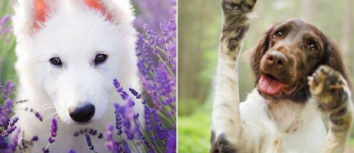 Tiesiog tobuli šunų portretai