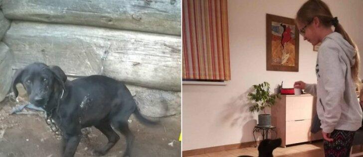 Jaudinanti nuskriaustų gyvūnų istorija: iš purvyno – į mylinčių šeimininkų lovą