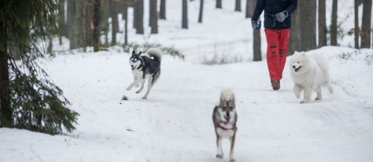 Didžiausi mitai apie šunis žiemą