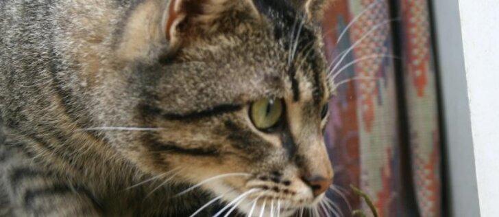 Sodininkai pasibaisėję: siautėja kačių korikas