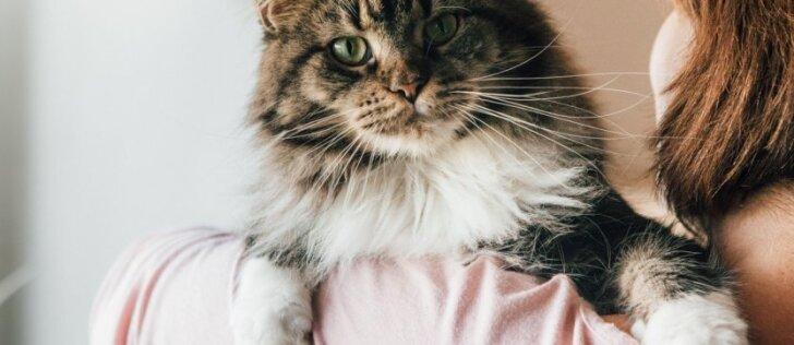 Gyvūnų veisėja užsiminė, kas brangiam katinui gali nutikti parodoje