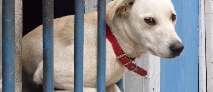 Šunelį paliko šalti, badauti ir valkatauti