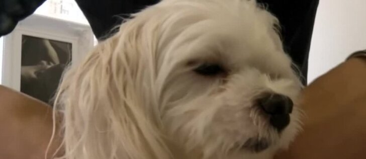 Taivane populiarėja šunų masažo kursai