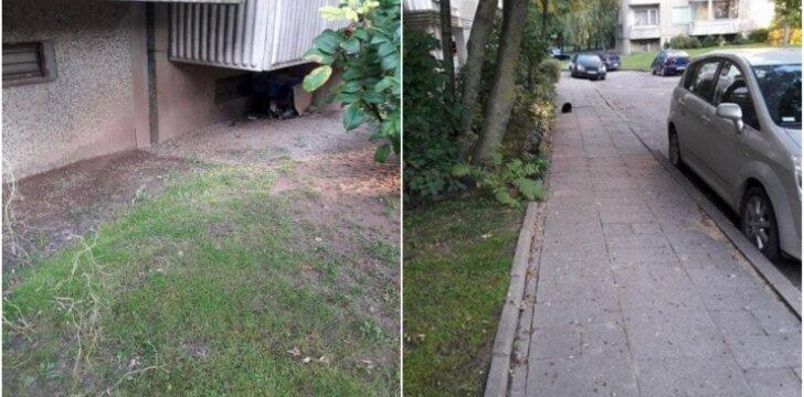Daugiabučio namo kiemas virto kačių šėrimo vieta