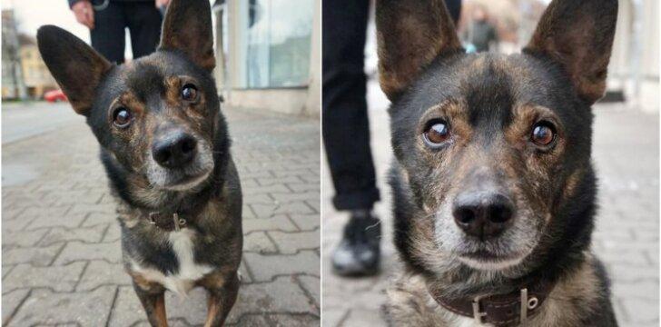 """Dogs of Vilnius"", Reksas"