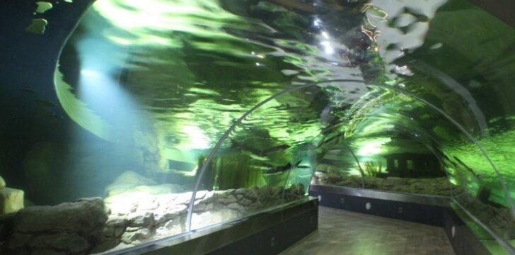 Rekonstruotas akvariumas atsiveria visu grožiu