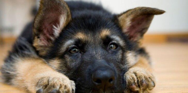 Vikos laiškas: kodėl šie šuneliai neturi savo namų