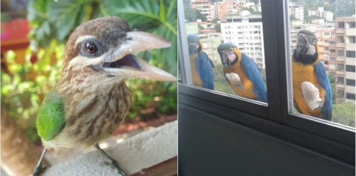 Paukščiai už lango