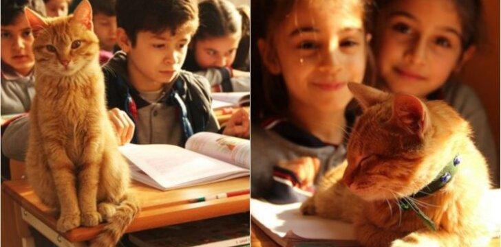 Katinas Tombis padeda vaikams mokytis
