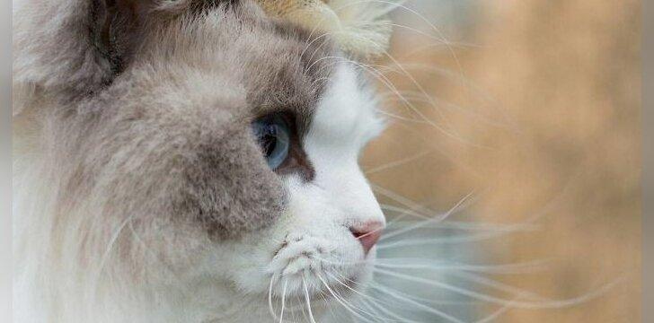 Katė Aurora