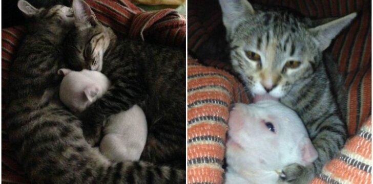 Katės su šuniuku