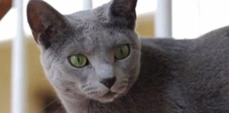 Katinas, kuris iš kantrybės išvestų net stipriausius