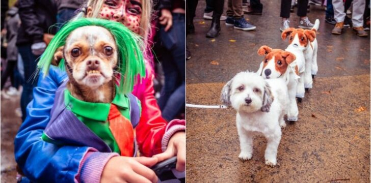 Šunų kostiumai