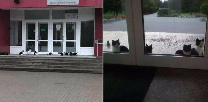 Spalio mėnesį daryta kačių, gyvenančių prie Akademijos gimnazijos, fotografija.