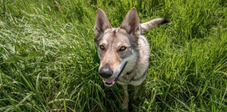 Nemalonus šuns kvapas – rodiklis, kad laikas apsilankyti pas veterinarą