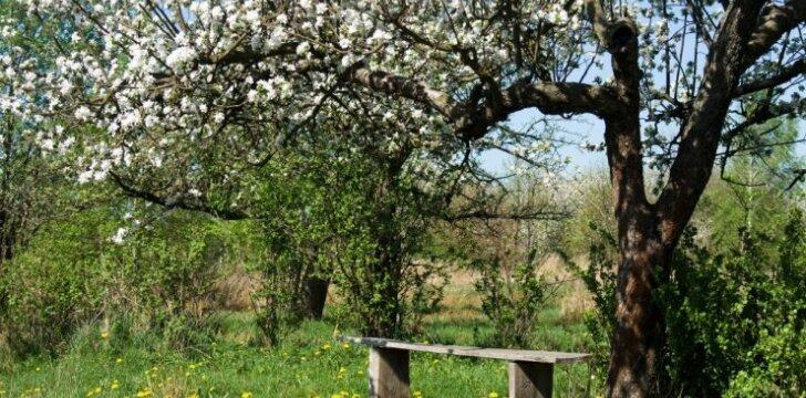 Patarimai, kaip išsirinkti medį savo kiemui