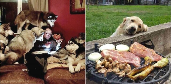Šunys prašo maisto
