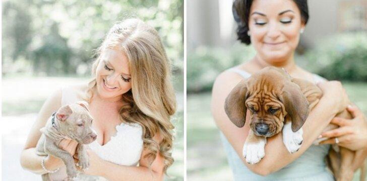 Šuniukai vestuvėse