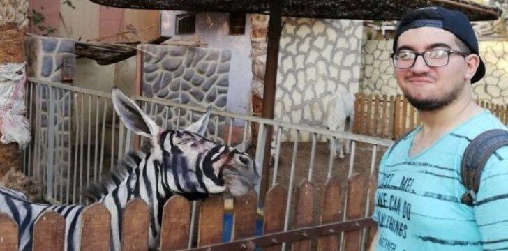 Įtaria Egipto zoologijos sodą asilą perdažius kaip zebrą