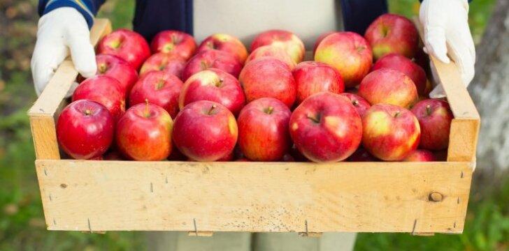 Kaip laikyti bulves, morkas bei obuolius per žiemą