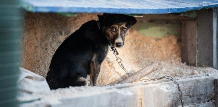 Benamis šuo (asociatyvi nuotr.)