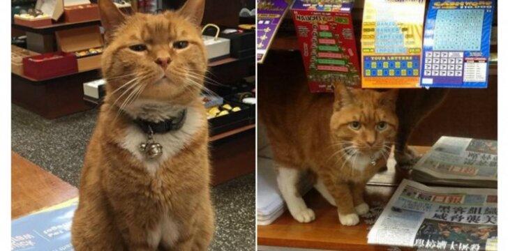 Katinas parduotuvės šeimininkas