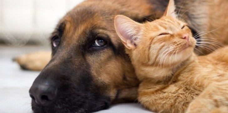 Intymus gyvūnų gyvenimas: kas yra geriausi meilužiai gamtoje