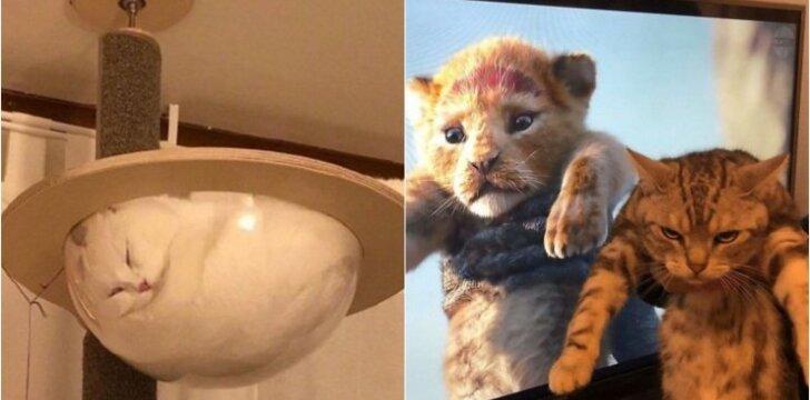 Juokingiausios kačių nuotraukos