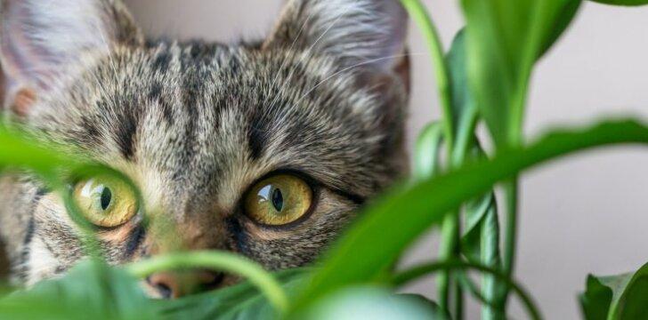 """Ar namuose <span style=""""color: #c00000;"""">""""įkalinta"""" katė</span> gali būti iš tiesų laiminga?"""
