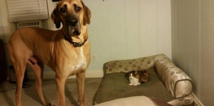 Kai namuose vadovauja katė: 20 šunų, kurie nesugebėjo pasipriešinti